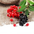 Wild black and red berries with leaves, isolated on white — Stock Photo