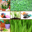 Collage of gardening theme — Stock Photo #34826735