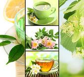 Collage of healthy green tea — ストック写真
