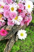Wildflowers and tree bark on grass — Stock Photo