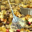 Cleaning of autumn leaves in park — Stock Photo #34838859