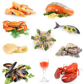 Seafood isolated on white — Foto Stock