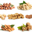 Nuts collection isolated on white — Stock Photo