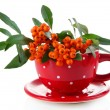Stock Photo: PyracanthFirethorn orange berries with green leaves, in vase isolated on white