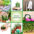 Collage of gardening theme — Stock Photo #34847509