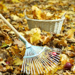Cleaning of autumn leaves in park — Stock Photo #34854529