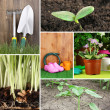 Collage of gardening theme — Stock Photo #34858329