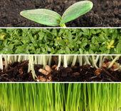 Gardening collage — Stock Photo