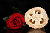 Loofah isolated on black — Stock Photo