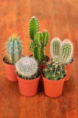 Collection of cactuses on wooden background — Stock Photo