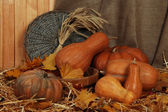 Pumpkins in wooden tub with sheaf and wicker stand on straw on sackcloth background — Stock Photo