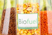 Biofuel in flasks — Stock Photo
