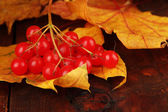 Red berries of viburnum with yellow leaves on wooden background — Photo