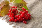 琼花麻布餐巾,孤立白底上的红色浆果 — 图库照片