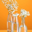 Plants in various glass containers on orange background — Stock Photo #35012535