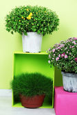 Flowers in pots with color boxes on wall background — Stock Photo