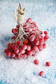 琼花与冰晶体,蓝色背景上的红色浆果 — 图库照片