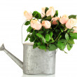 Beautiful bouquet of roses in watering can, isolated on white — Stock Photo #35025535