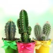 Collection of cactuses in bright pails on wooden table — Stock Photo #35038651