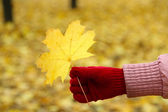 Yellow leaf in hand — Stock Photo