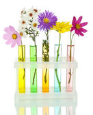 Flowers in test-tubes isolated on white — Stock fotografie