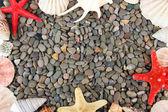 Small sea stones and shells, close up — Stock Photo