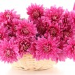 Bouquet of pink autumn chrysanthemum in basket isolated on white — Stock Photo #35081079