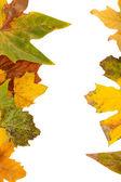 Quadro de folhas de outono isolado no branco — Foto Stock