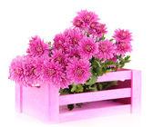 μπουκέτο με ροζ φθινόπωρο χρυσάνθεμο σε ροζ ξύλινα κιβώτιο που απομονώνονται σε λευκό — Φωτογραφία Αρχείου