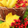 Beautiful autumn leaves and red berries in basket on grass background — Stock Photo