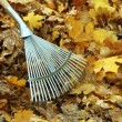 Cleaning of autumn leaves in park — Stock Photo #35148449