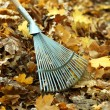 Cleaning of autumn leaves in park — Stock Photo #35148465