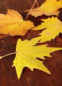 Beautiful autumn leaves on wooden background — Stock Photo