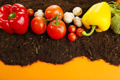 Vegetables on ground on color background — Stock Photo