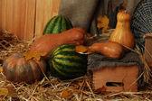 Abóboras e melancias com carrinho de vime e caixas na palha no fundo do saco de carvão — Fotografia Stock