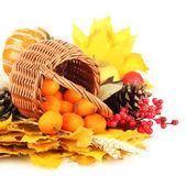Beautiful autumn composition, isolated on white — Stock Photo