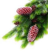 Christmas decorations on fir tree, isolated on white — Stock Photo