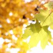 Stock Photo: Autumnal background