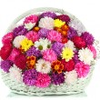 Beautiful bouquet of chrysanthemums in wicker basket isolated on white — Stock Photo #35286899