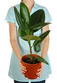 鍋に白で隔離される女の子の手で美しい花 — ストック写真