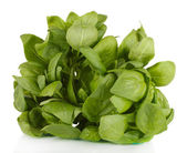 Green fresh basil isolated on white — Stock Photo