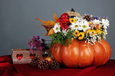 Beautiful autumn composition in pumpkin with bumps and decorative box on table on gray background — Foto Stock