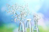 Plants in various glass containers — Stock Photo
