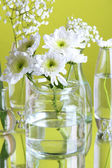 Plants in various glass containers on green background — Stock Photo