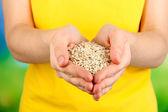 Wheat grain in female hands — Stock Photo