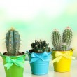 Collection of cactuses in bright pails — Stock Photo #35370201