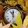 Foto Stock: Old clock on autumn leaves close-up