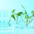 Plants in test tubes, on color background — Stock Photo