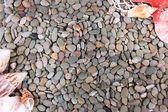 Small sea stones and shells — Stock Photo
