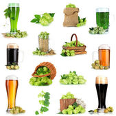 Green hop and beer isolated on white — Stock Photo